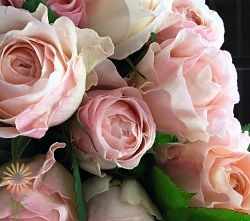wholesale flowers | garden spray rose tutu