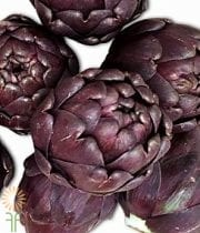 Red Artichoke Stem, Baby