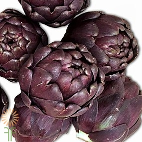 wholesale flowers | BABY-RED-ARTICHOKE