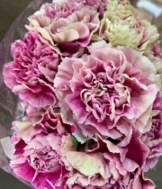 Lavender Specialty Antigua Carnations