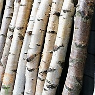 medium-birch-poles wholesale