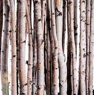 small-birch-poles wholesale