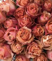 Peach Carpe Diem Roses