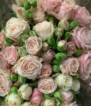 Pink Malaya Gem Spray Roses