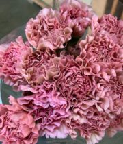 Dusty Pink Specialty Lege Carnations