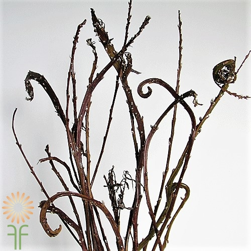 wholesale flowers | pussy willow fantail