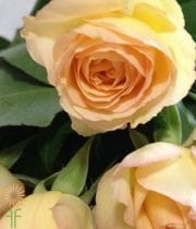 Light Peach Citrine Gem Spray Roses