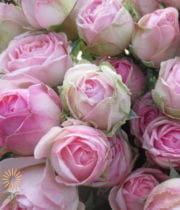 Light Pink Quartz Gem Spray Roses