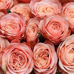 wholesale flowers | rose kahala