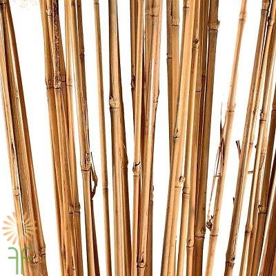 wholesale bamboo stalks