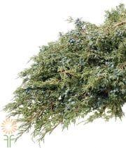 Greens, Juniper (berried) 25lb Case