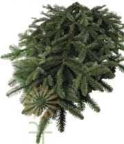 Greens, Noble Fir 25lb Case