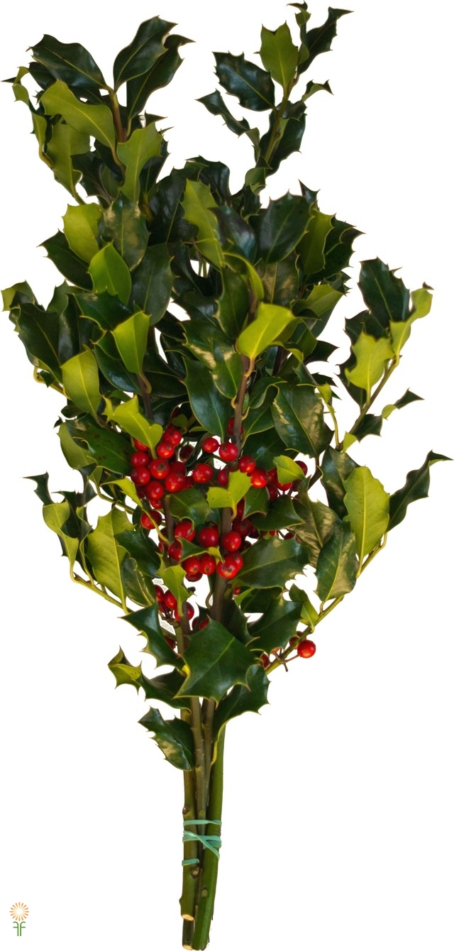 HOLIDAY GREENERY HOLLY GREEN CASE