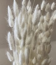 Dried Bleached Bunny Tails