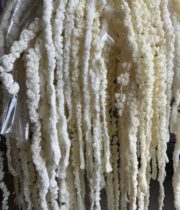 Dried Bleached Hanging Amaranthus