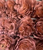 Macchiato Tinted Brown Roses