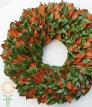Holiday Magnolia Wreath,  Plain 24″