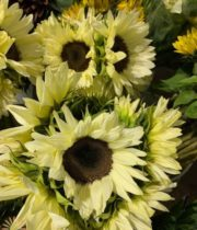 White Sunflowers