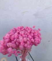 Dried Pink Helichrysum
