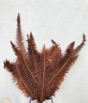 Dried Preserved Brown Fern