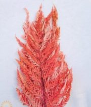 Dried Orange Italian Fern – Large