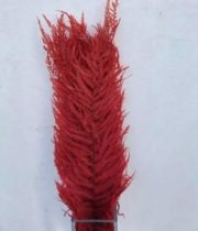 Dried Red Italian Fern, Medium
