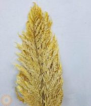 Dried Yellow Italian Fern, Large