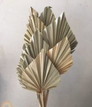 Dried Natural Fan Palm Spears
