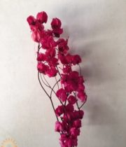 Dried Hot Pink Bougainvillea