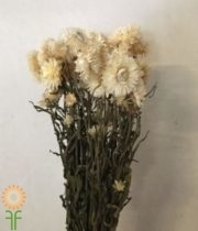 Dried White Strawflower