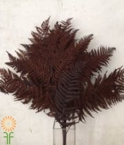 Dried Brown Leather Leaf