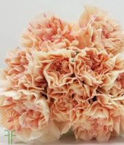 Peach Specialty Apple Tea Carnations