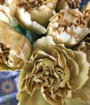 Beige/Yellow Specialty Mustard Carnations