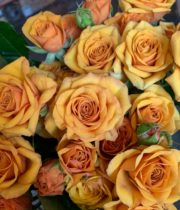 Orange Aurelia Spray Roses