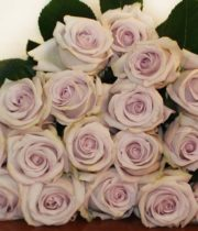 Lavender Bounty Way Roses