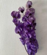 Dried Lavender Bougainvillea