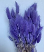 Dried Amethyst Bunny Tail Grass