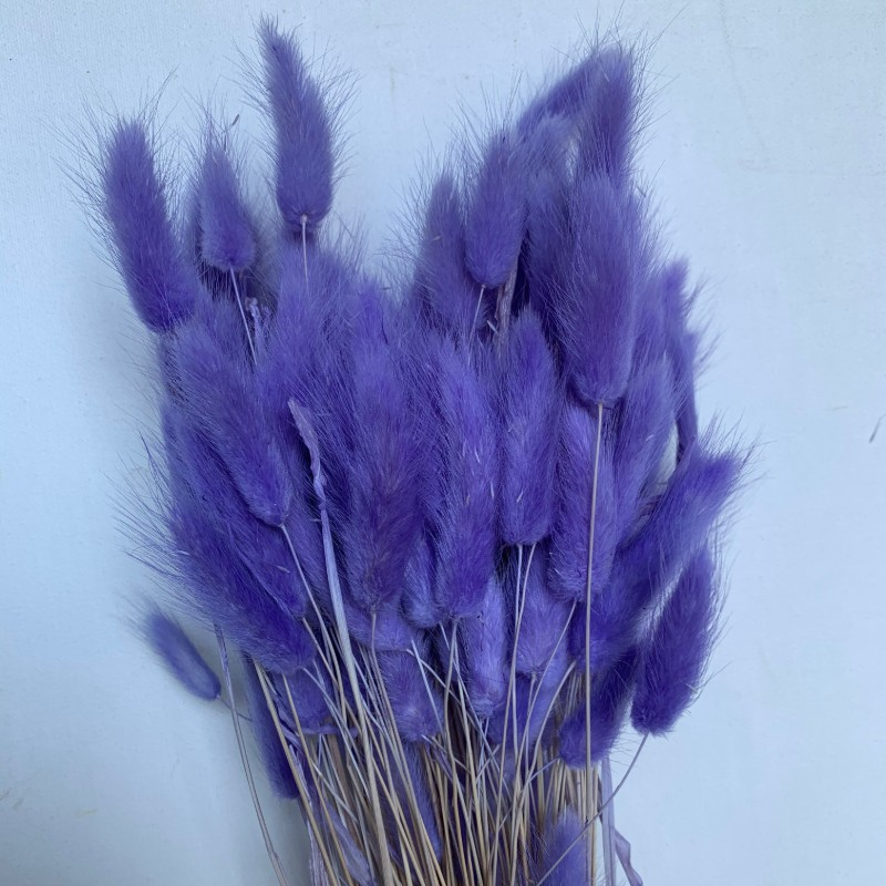 Dried Bunny Tail Grass Amethyst