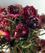 Dried Red/Burgundy Strawflower