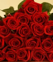 Red Roses 25 Stems