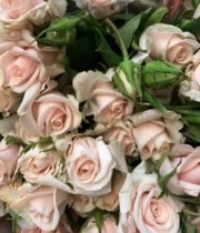 Blush Royal Porcelina Spray Roses