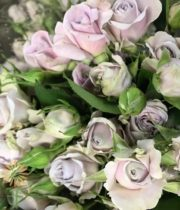 Lavender Silver Shadow Spray Roses